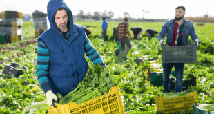 General Farm Worker Required in Canada
