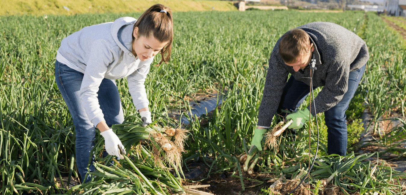 Farm Worker Jobs Available in Canada